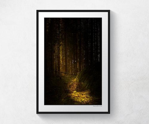 Otterstad skog 1