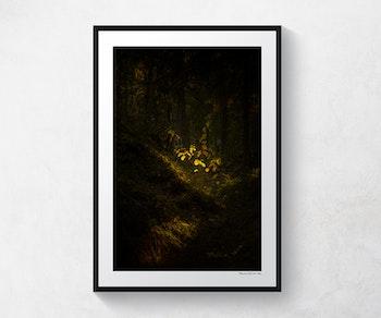 Otterstad skog 3