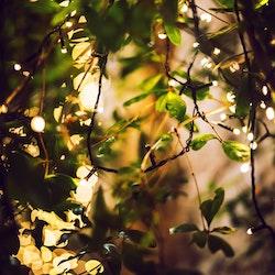 LightsOn Glimmer Ljusslinga