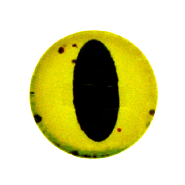 Ögon 42 Cabochon 12mm 1st