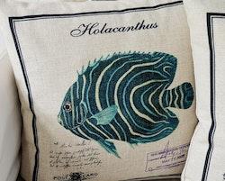 Marina - Holacanthus