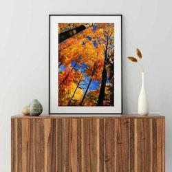 Posters - Höst i skogen