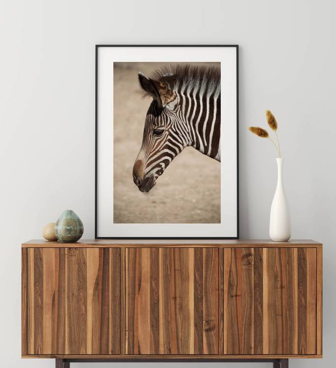 Posters - Zebra