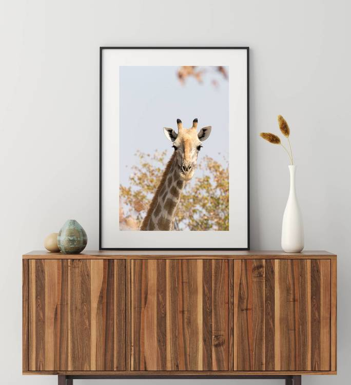 Posters - Giraff