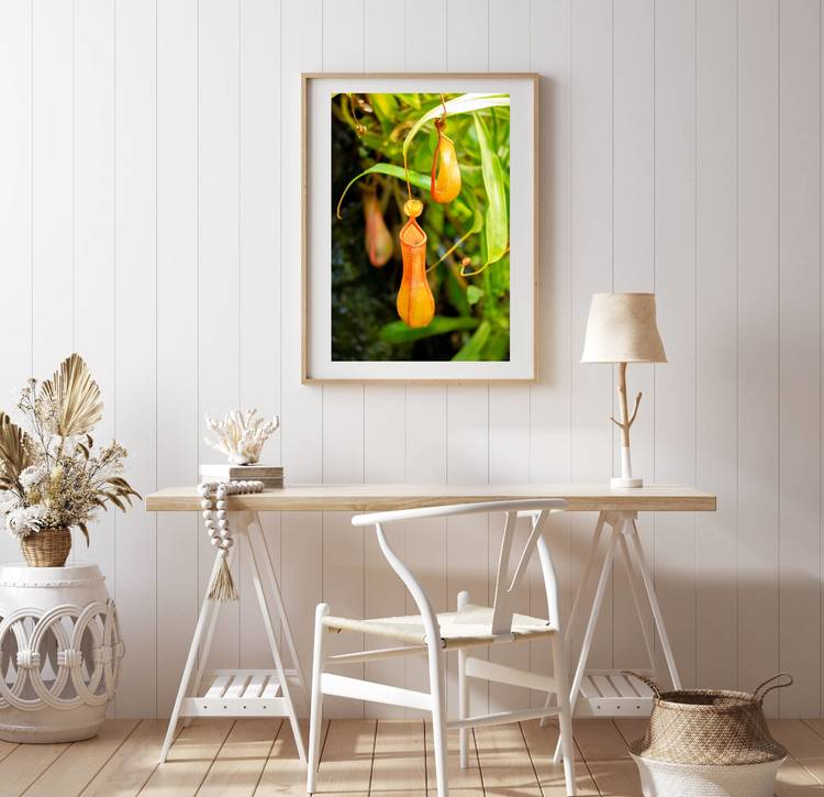 Posters - Nepenthes
