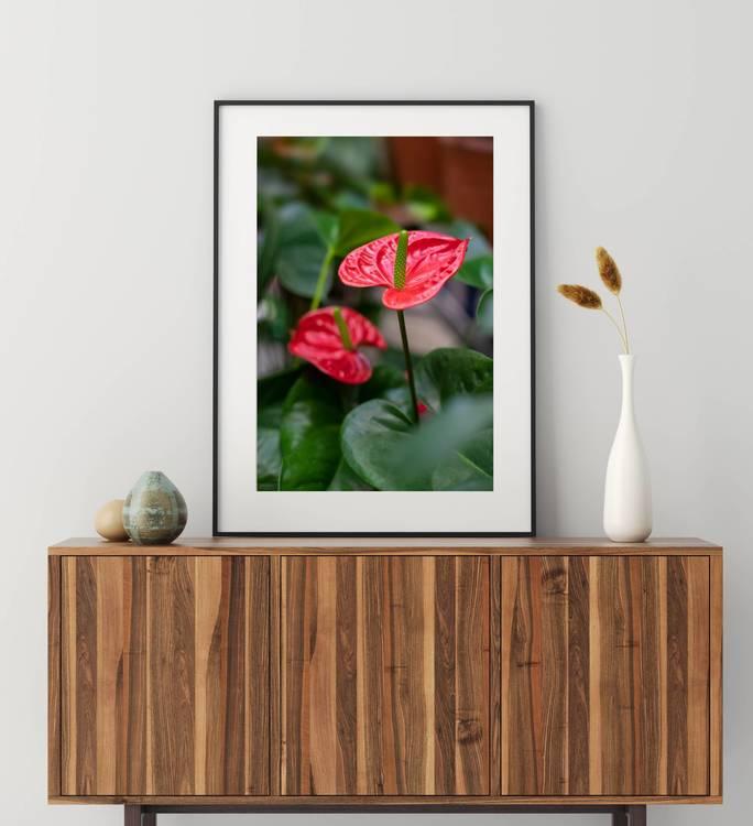 Posters - Flamingoblomma