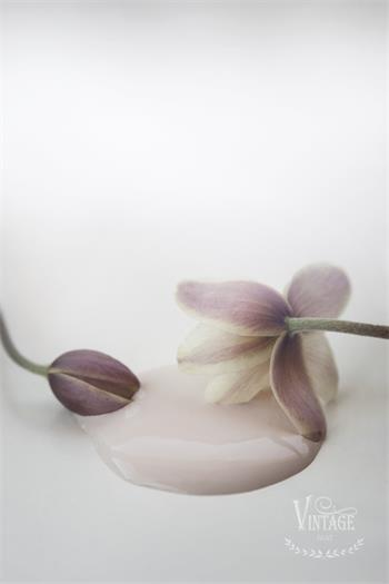 Kalkfärg Antique Rose 100 ml