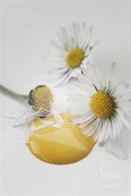 Kalkfärg Warm Yellow 100 ml