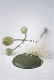 Kalkfärg Olive green 700 ml