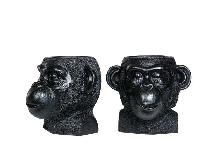 Kruka svart apa