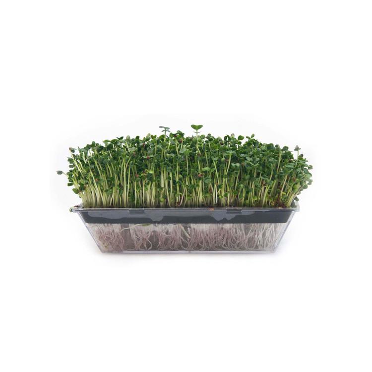 Ekologiska Grönkålsfrön