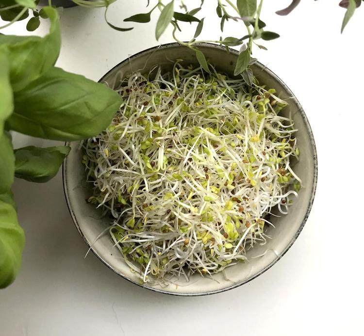 Groddburk i glas +  Ekologiska Broccolifrön