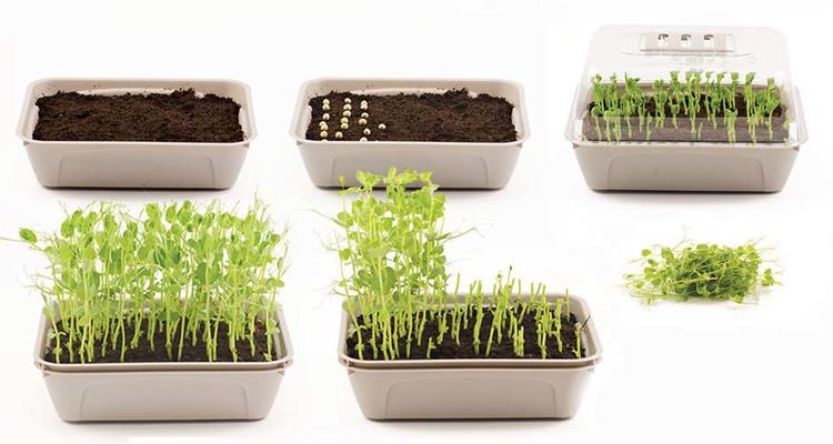 3 odlingslådor för skott, bladsallad och kryddor
