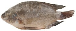 Tilapia- black (bigi mama) 1kg