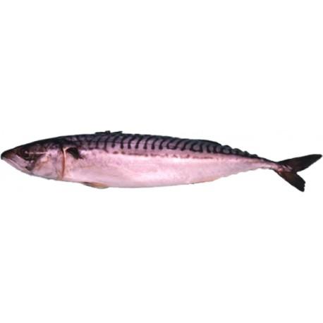 Makreel 1 kg