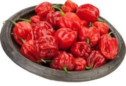 Pili-pili Red