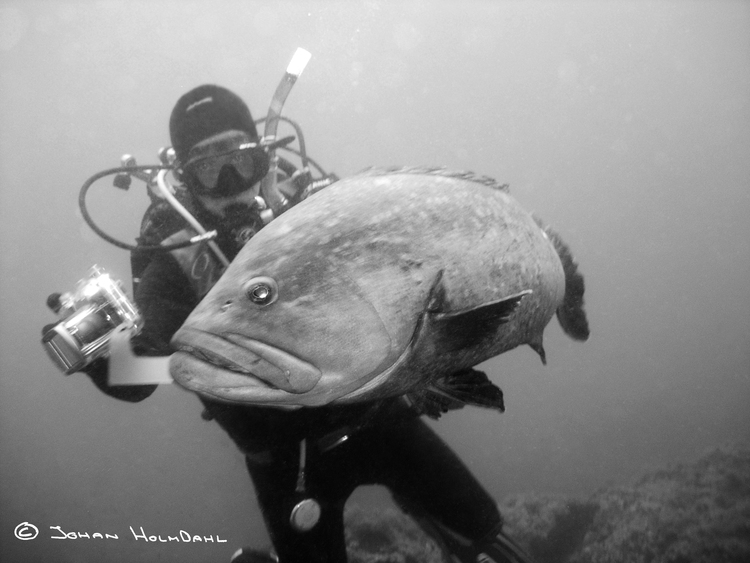 Diver & Grouper - Medes Islands 2014