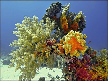 Colorful Corals - Egypt 2018