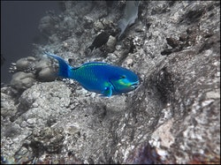 Blue - Maldives 2017