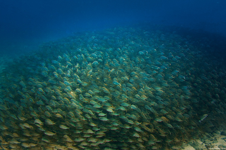 School of Fish - Gran Canaria 2018