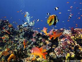Korallrev - Maldiverna 2017