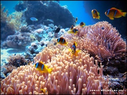Hitta Nemo - Egypten 2018