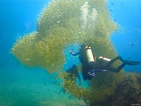 Fishdream 2 - Phi Phi Islands 2018
