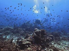 Aquarium - Similan ilands 2018