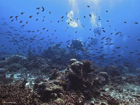 Aquarium - Similan Islands 2018