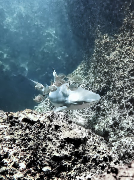 Blacktip Reef Shark - Phi Phi Islands 2019
