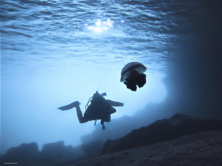 Jellyfish & Diver - Phi Phi Islands 2019