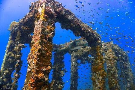 Artifical Reef - Phi Phi Islands 2019