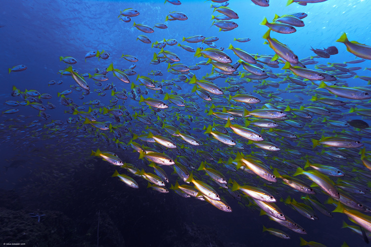 School of fish - Koh Bida Nok 2019