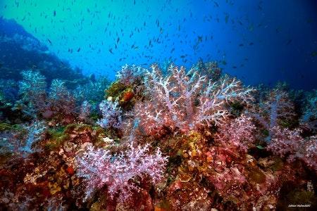 Colorful Corals No.1 - Koh Haa 2019
