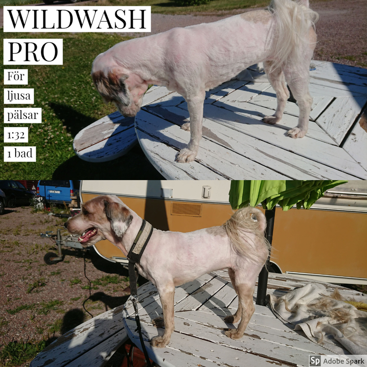 WILDWASH PRO Schampo for Light coloured coats - för ljusa pälsar 5L
