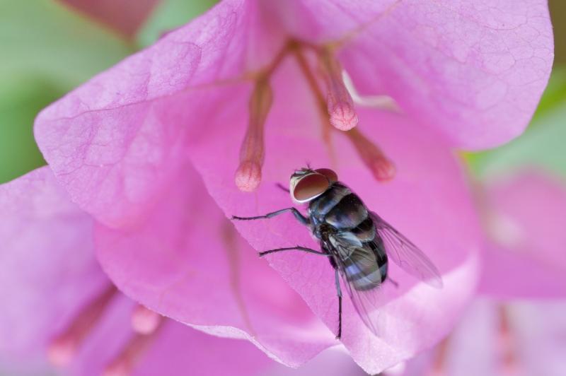 Pollinerande djur i naturlig kärleksakt