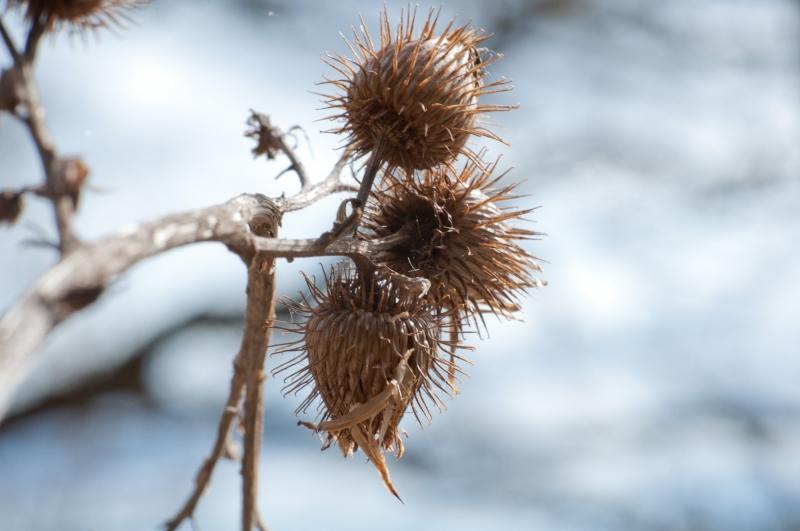 Varje frö är del av naturens genbank