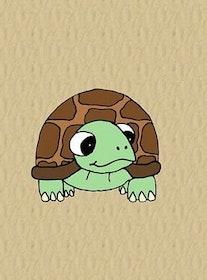 Sköldpadda by Needly.se panel
