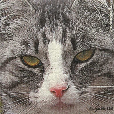 Disktrasor med kattmotiv