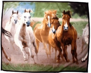 Fleecefilt Hästar