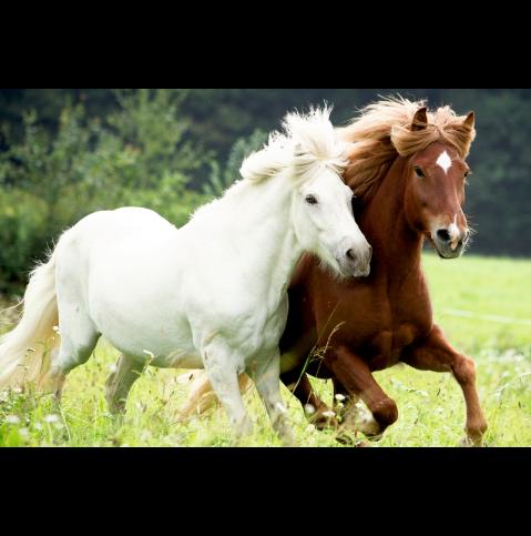 Pussel Hästar på ängen från Die Spigelburg