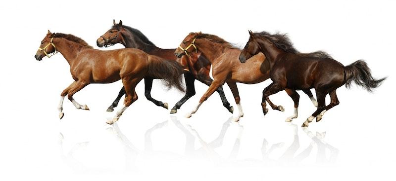 HorseStuff