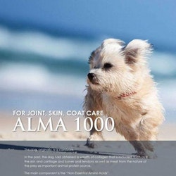 ALMA 1000
