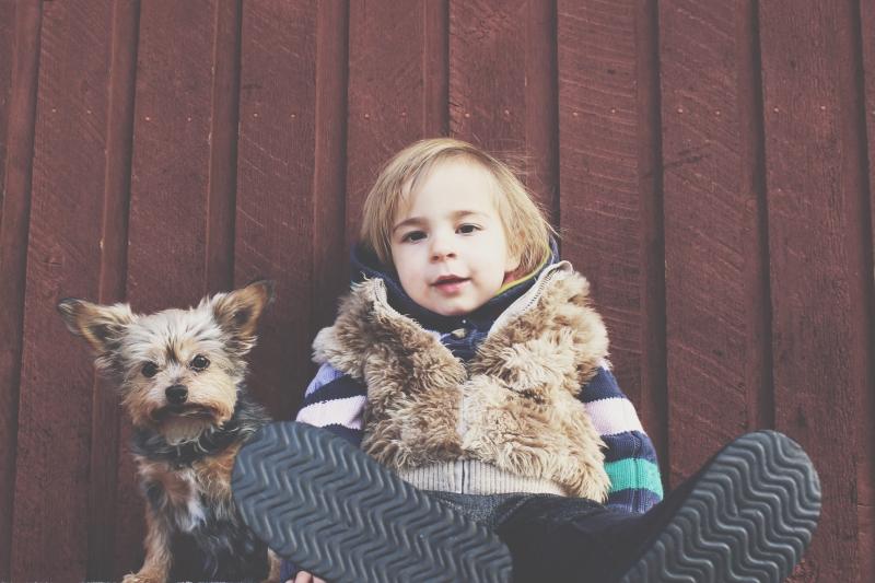 Husdjur – Fem starka skäl att införskaffa