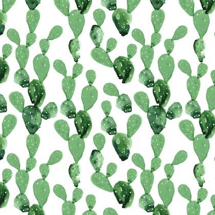 Tapet kaktus
