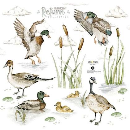 Dekornik, Väggklistermärken ducks on the lake