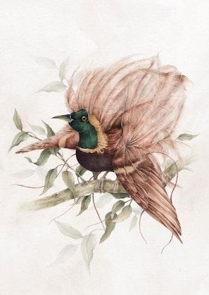 Poster vintage fågel,  poster till barnrummet