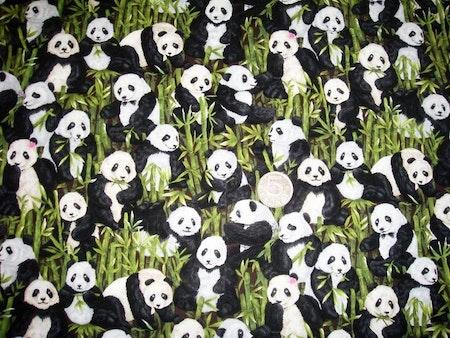 Panda #S38