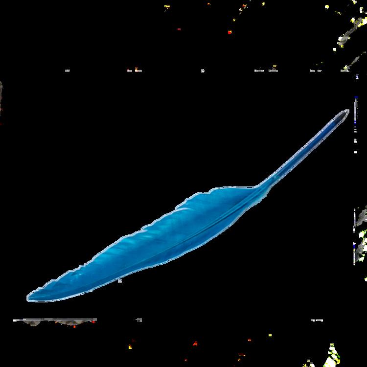 Fjäderpenna - blå