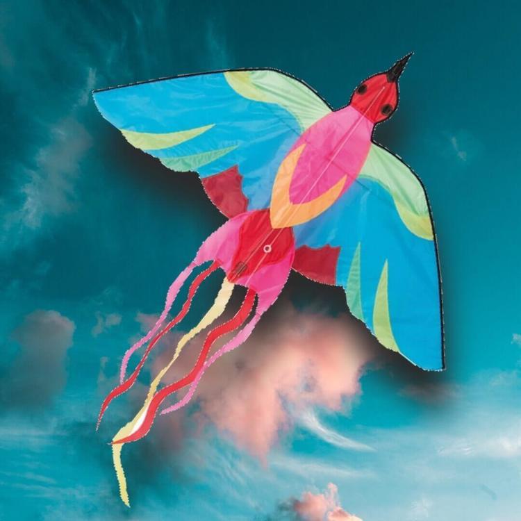 Vacker Drake - Fågel